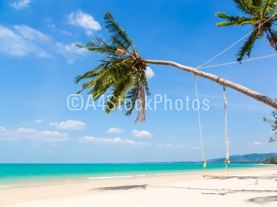 White sand beach and palm tree